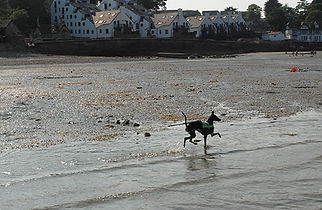 Dogs on Isle of Wight Beaches