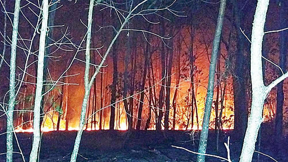 The recent island bushfires