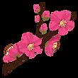 flower_ume_kaika.png
