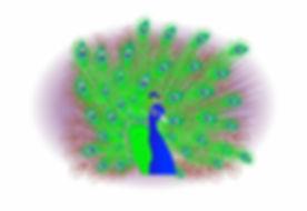Digital peacock