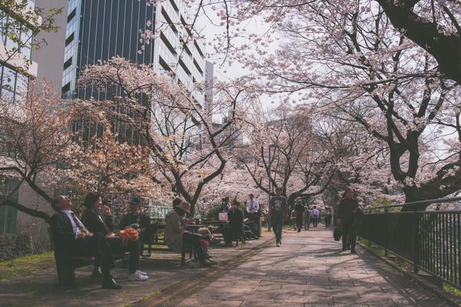 April 5th Sakura part 2