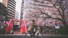 2017 Sakura blossom report
