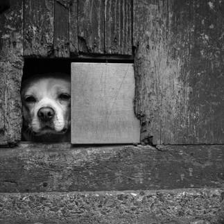 doggy window doggy door