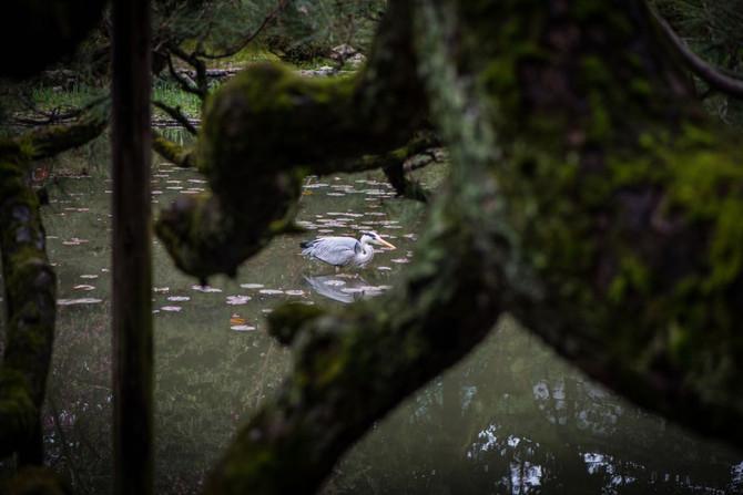 Kyoto sakura madness pt3