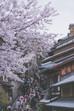 Kyoto sakura madness pt4