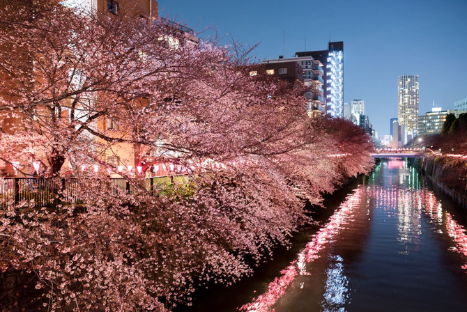 2017 April 4th Night Sakura along Meguro River