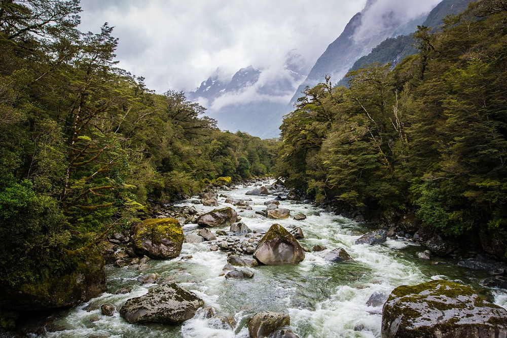 river in Milford sound, South Island New Zealand