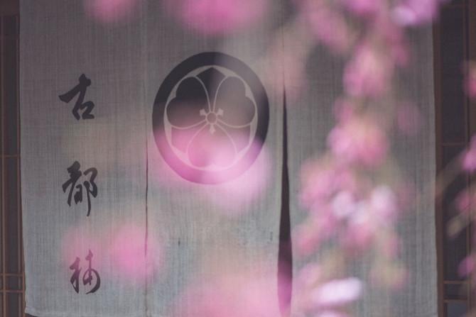 Kyoto sakura madness pt2