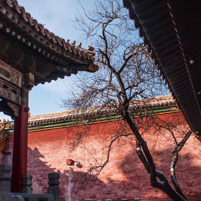 Forbidden city tree