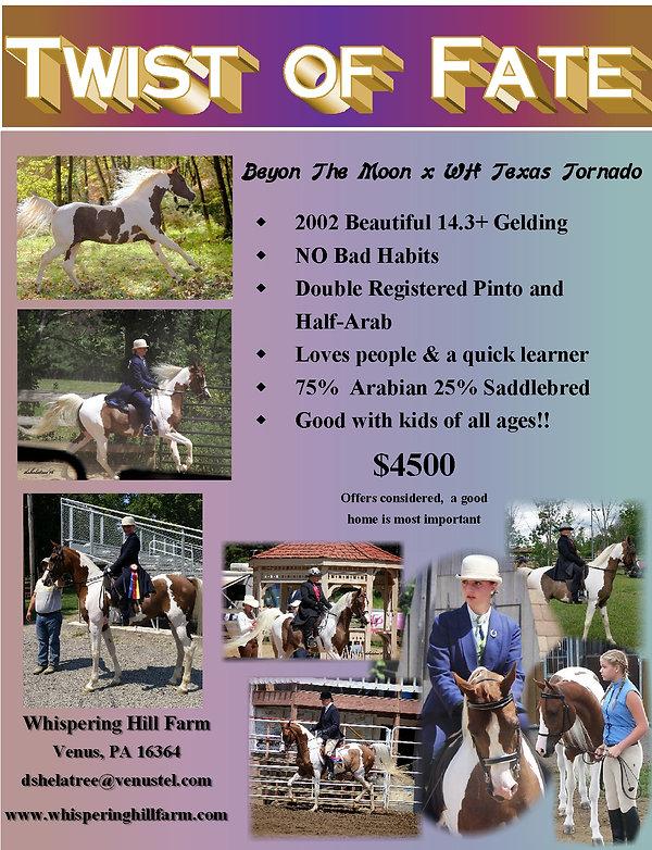 Dallas sales flyer4.jpg