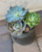 Large Succulent Garden for Father's Day gift in Gilbert East Valley Arizona
