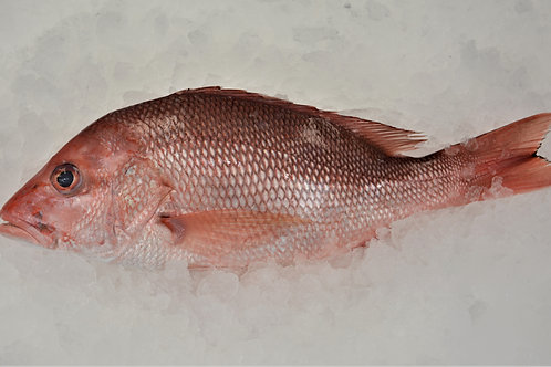 American Red Snapper (Whole Fish - Approx. 3 lbs)