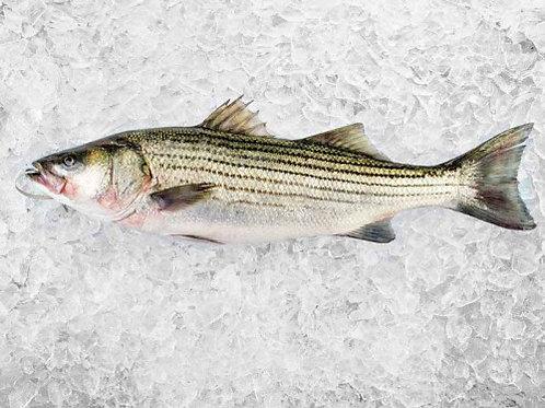 Wild Striped Bass Halibut (One Side)