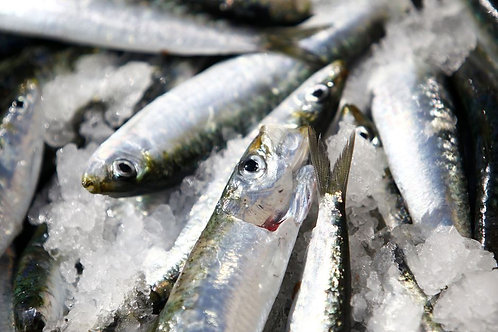 Sardines (price per pound) Out of Season until May 2021