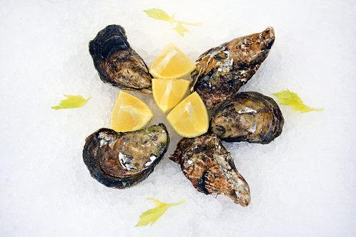 Blue Point Oysters (price per dozen)