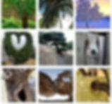 Электронные фото карты МАК метафорически ассоциативные карты для работы психолога  Деревья