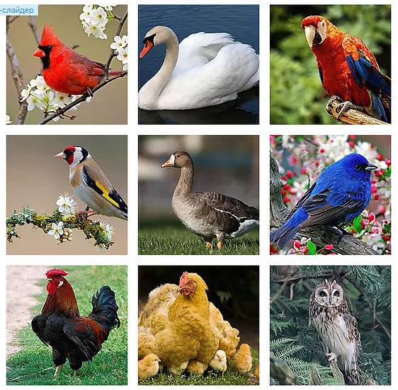 Фотоколода МАК - Птицы и насекомые