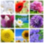 Электронные фото карты МАК метафорически ассоциативные карты для работы психолога Цветы