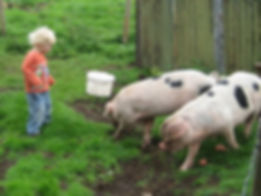 Child and pigs