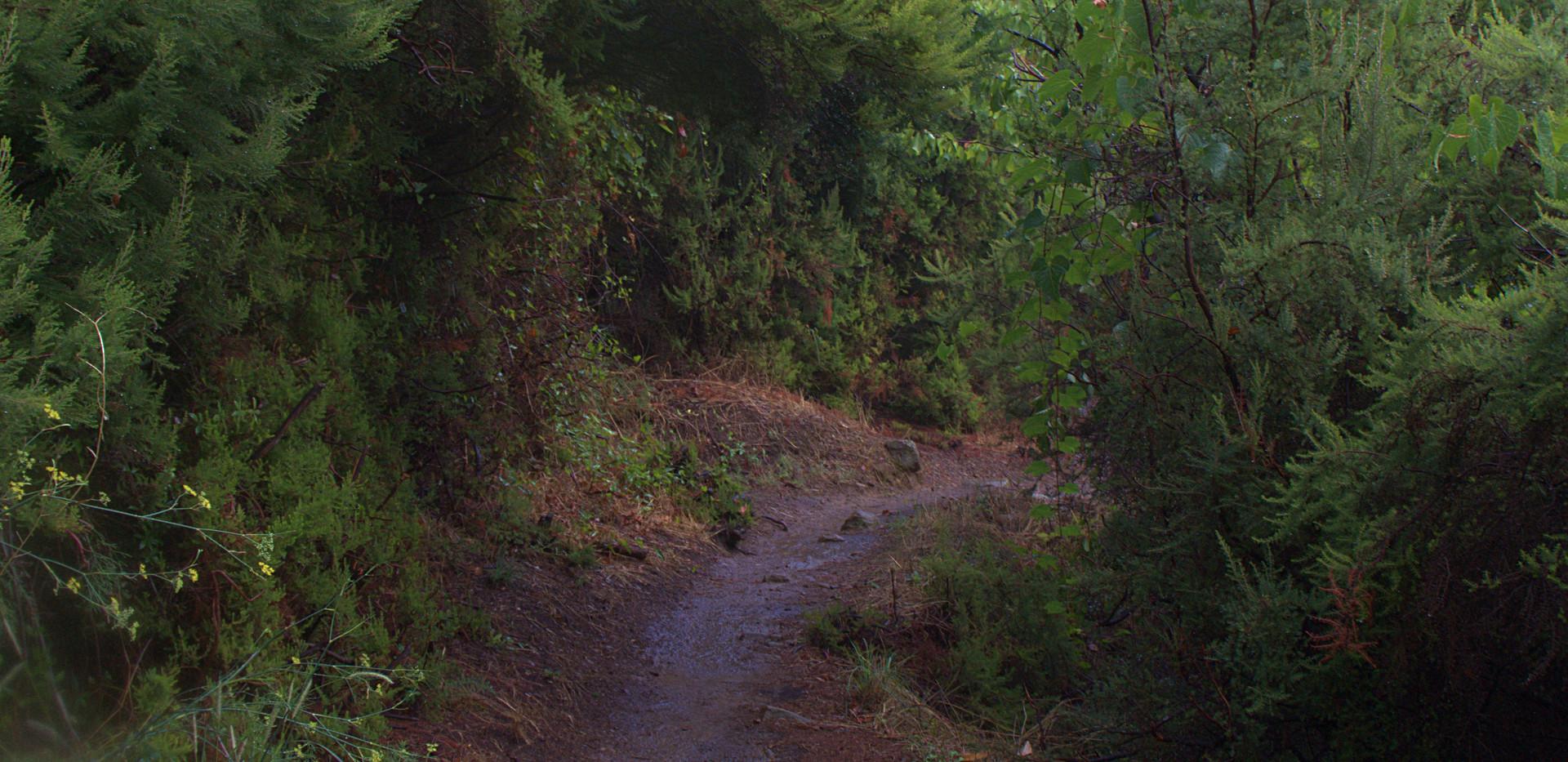 trek2.5.jpg