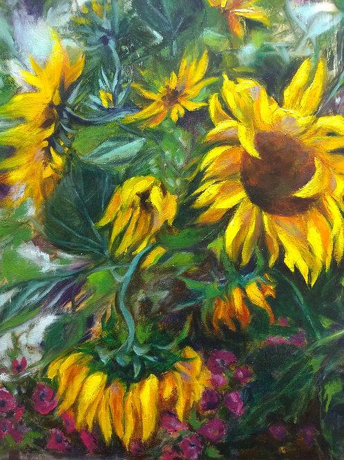 Morning Walk Sunflowers
