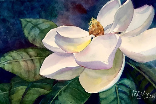 Magnolia by Susan Webb Tregay