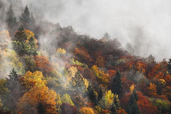 Couleurs d'automne ArnaudBrukhnoff