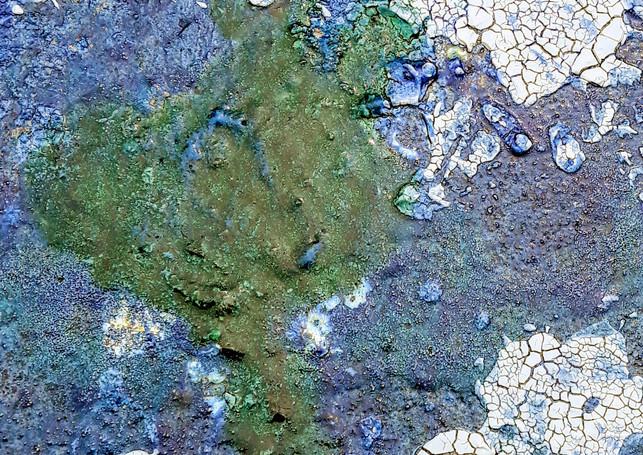 schima e alghe