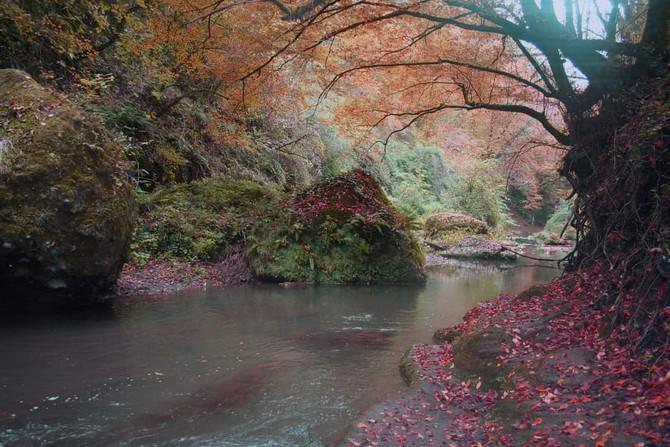 Titti i colori dell'autunno