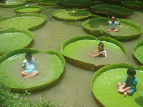 a proposito di piante d'acqua