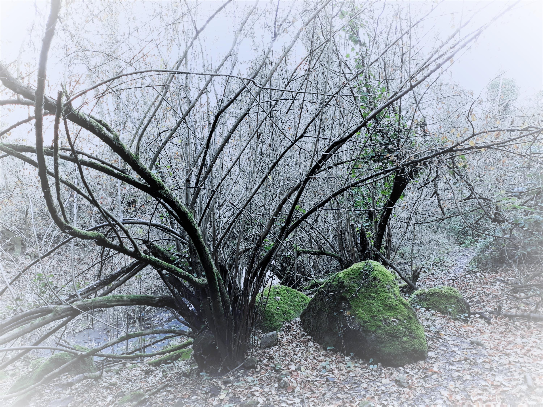 sentiero della sorgente Cremera