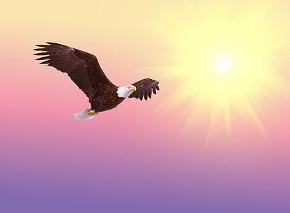 bald-eagle-521492_1920.jpg