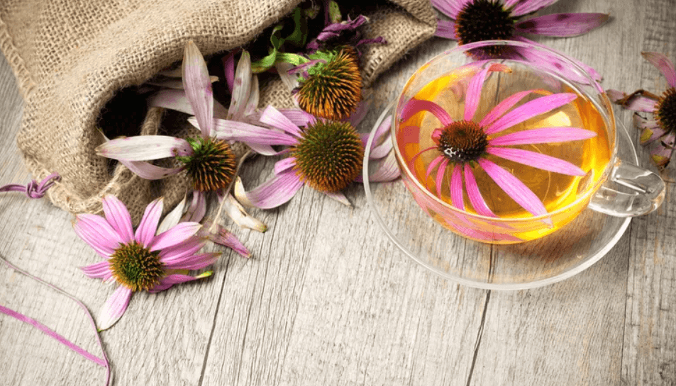 Echinacea tea in a transparent cup. A Echinacea blossom float in the cup
