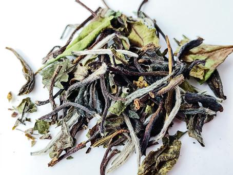 最天然的茶:白茶?