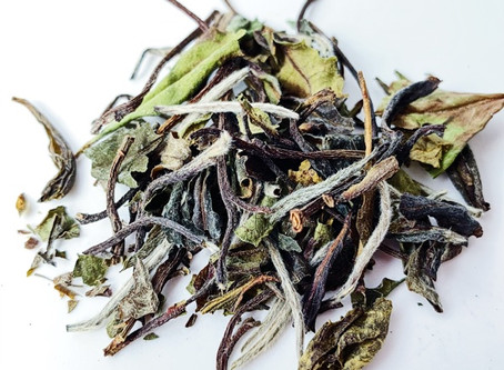 "The Most ""Natural"" Type of Tea: White Tea?"