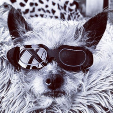 Cool Pup