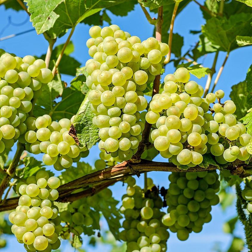 Wijndomein De Kluizen bezoeken en wijntjes degusteren