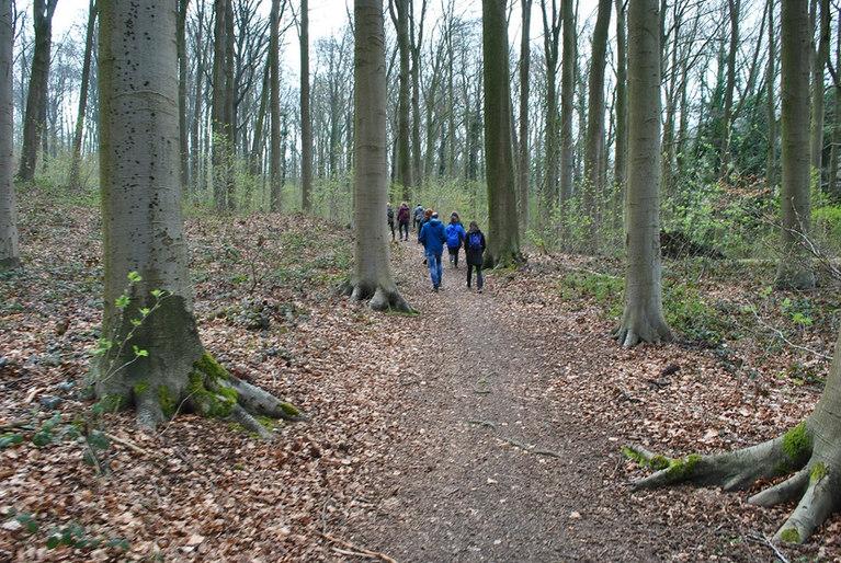 Wandeling in het Koppenbergbos