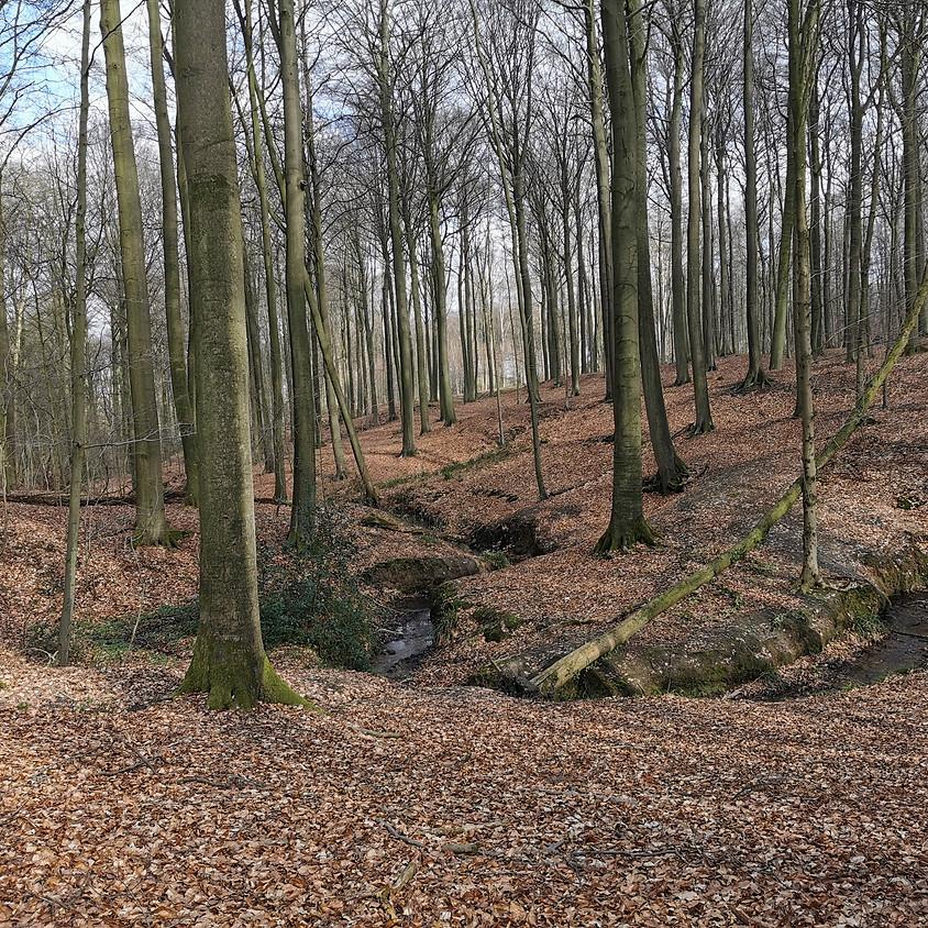 Wonderlijke herfstkleuren en paddestoelen in de Vagevuurbossen, St. Maria Aalter, 14km
