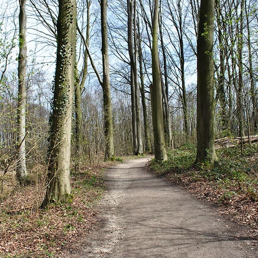 Wandelen in Kluisbos voor vrijgezellen (6,4km)