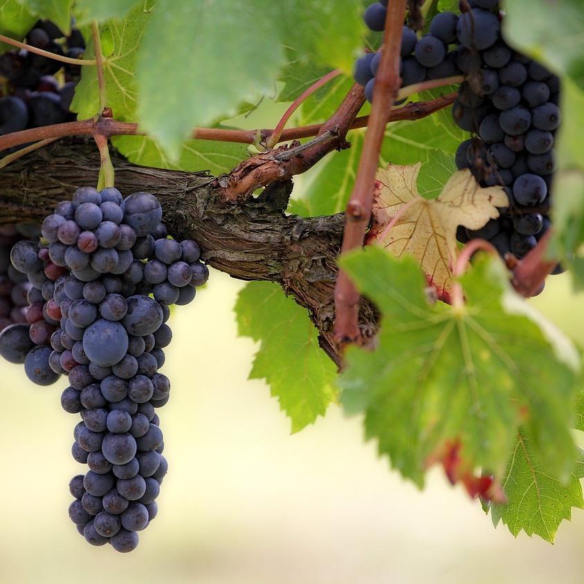 Wijngoed 't Varent bezoeken en wijn degusteren (Regio Vlaamse Ardennen)