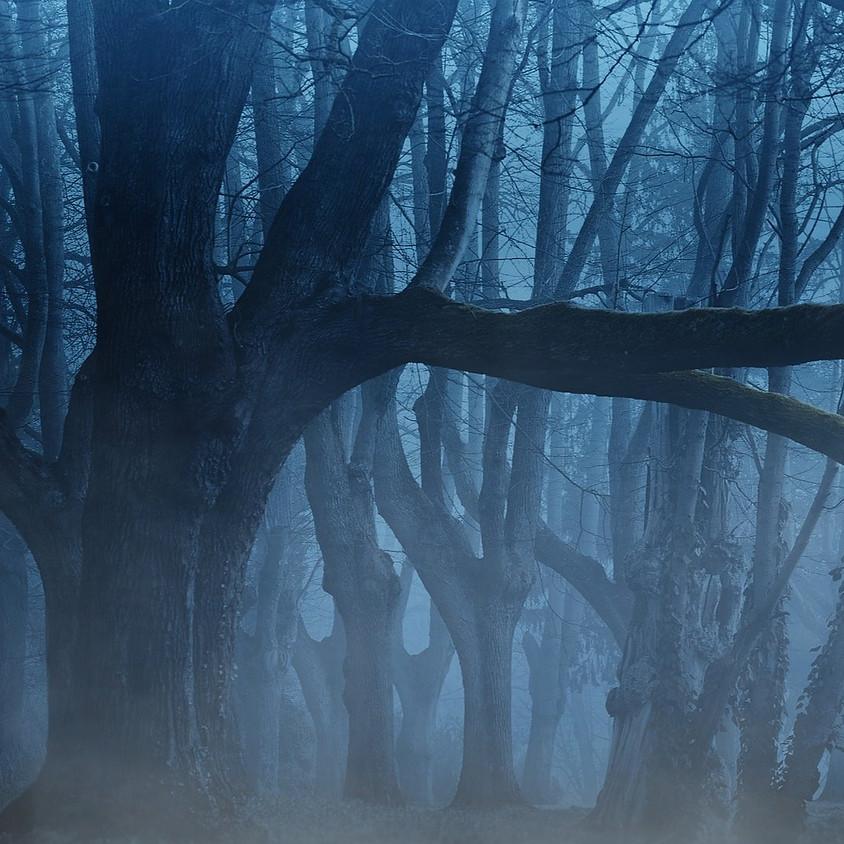 Avondwandeling door een donker bos