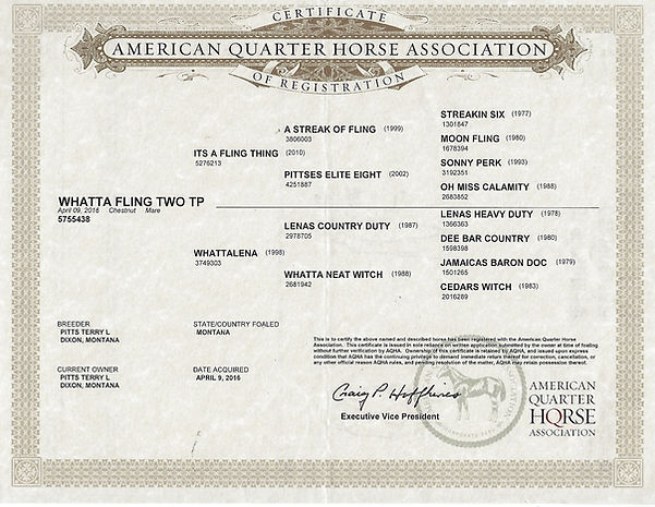 Whatta Fling Two TP 2016 chestnut mare W