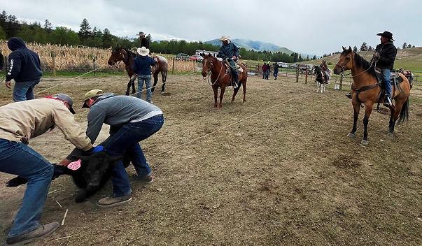 Horses holding calves at branding May 8