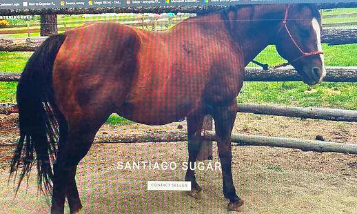 Santiego Sugar Picture.jpg