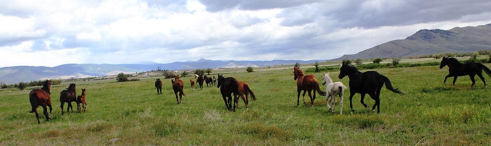 Mare and foals at Artesian May 28 2021.J