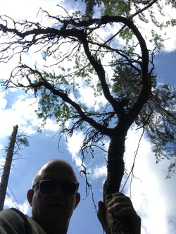 - Picking branches and roots in the Cans