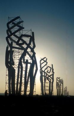 - Desert Flowers - 10 x 75 feet tall, Du