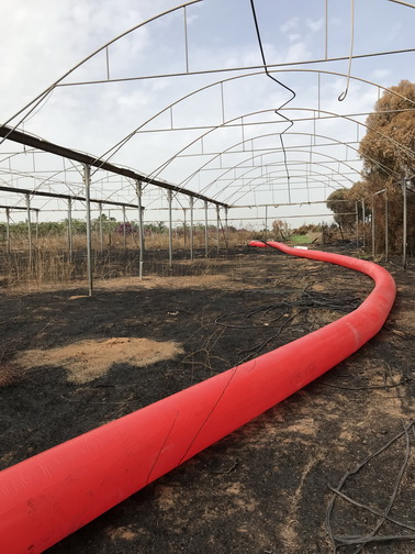 - - Red Line in a plantation + green hou
