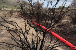 - the Red Line amoung the burnt trees -